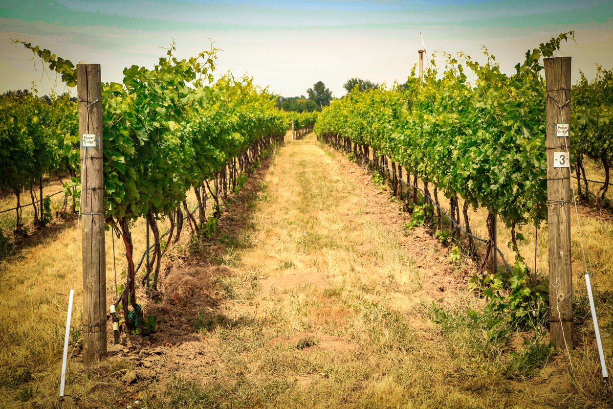 Marketing a Small Winery: Top 5 Tips
